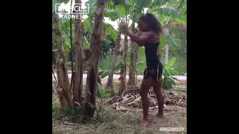 Боец Муай Тай ломает дерево!