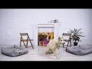 Хаски Флора TiTBiT Собаки в нашей жизни Интервью 4 Сибирский Хаски