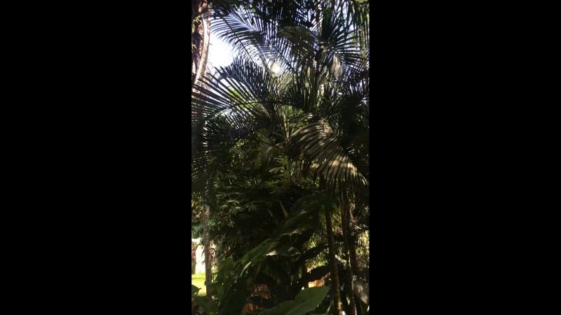 Джунгли Бали Сафари парк