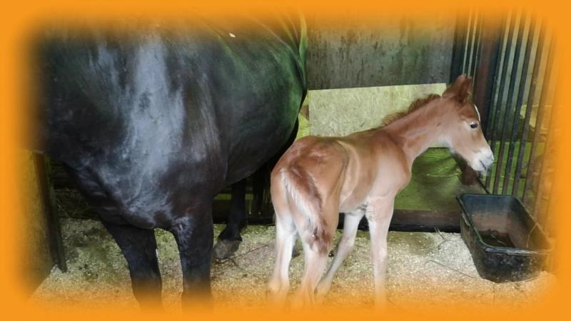 Жеребенок, черной лошади ребенок... ЗООПАРК