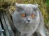 На 5-ой секунде кот говорит