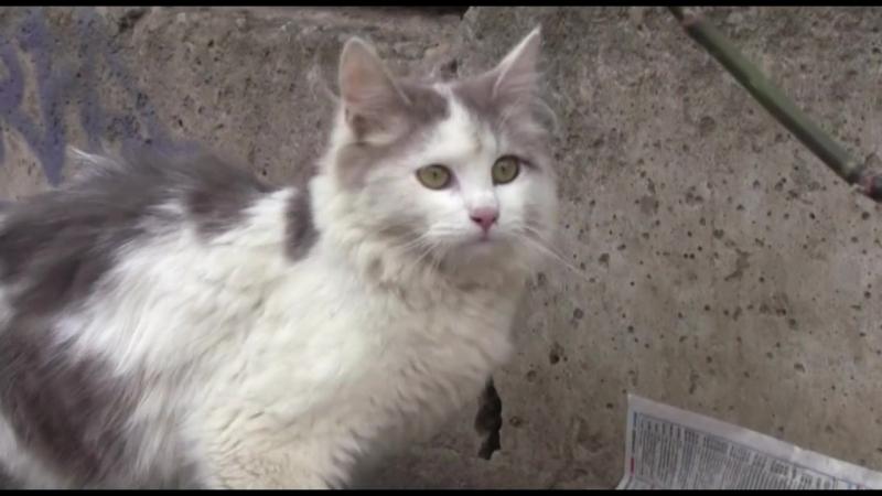 Кошка ищет прежний или новый дом г Волхов