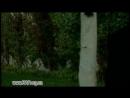 Дельфин feat. Stella - Глаза