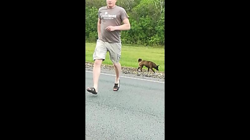 Собака на трассе 2 года