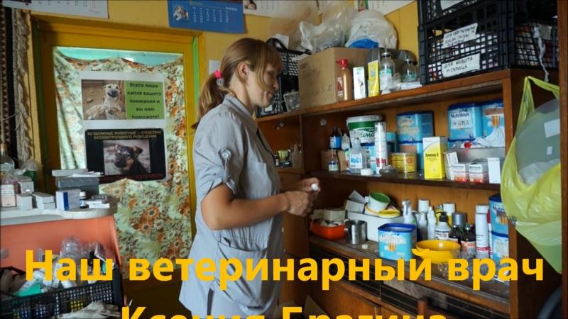 Сыктывкар - город мечты или один день из жизни приюта. Немного о нашей работе. Часть четвёртая.