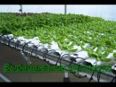 Гидропоника Выращивание растений в домашних условиях Бизнес идея