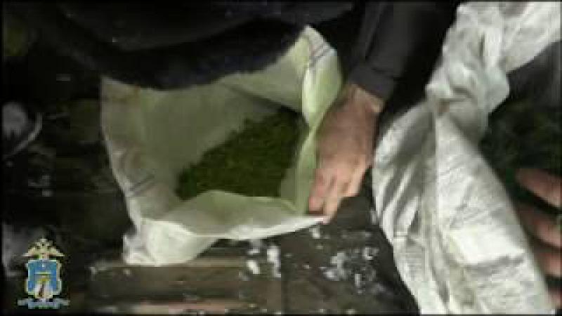 Изъятие марихуаны (Новоселицкий район)