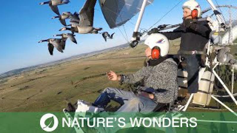 Pilot Takes To The Skies With Bird Flocks