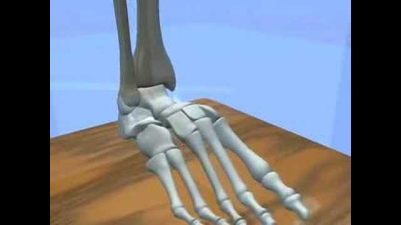 Ankle Subtalar Joint Motion Function Explained Biomechanic of the Foot Pronation Supination