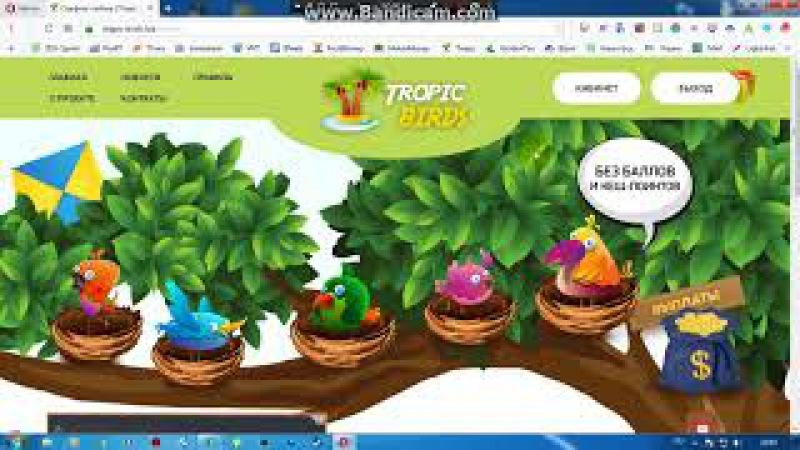 Tropic Birds. Птички Без баллов и Кеш поинтов