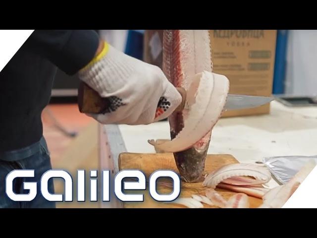 Stroganina: Das sibirische Sushi | Galileo | ProSieben