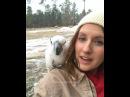Snowee The Umbrella Cockatoo