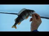 Рыбалка в Карелии-Открытие сезона зимней рыбалки!Озеро Урозеро-14.01.2018г-Opening of the wi...