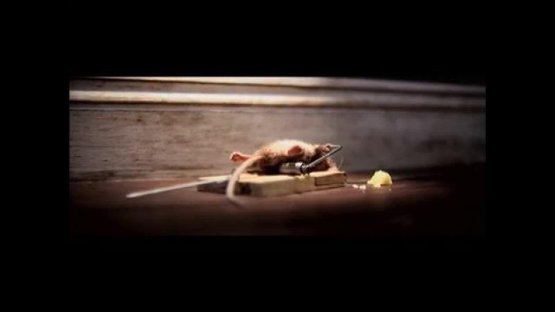 Мышь и Nolan's Cheddar, в рекламе 2010 года. Никогда не сдавайся! Ночь пожирателей рекламы