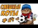 Приколы с котами 2017 Смешные Коты Футболисты Видео Кошки ДО СЛЁЗ