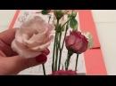 Екатерина Фоамиран Екатеринбург_Реалистичная Эустома из фоамирана. Часть 1 Изучение строения цветка Эустомы, создание шаблона
