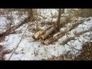 Вырубают леса лесного фонда якобы переведенные в земли поселений В общем мутна