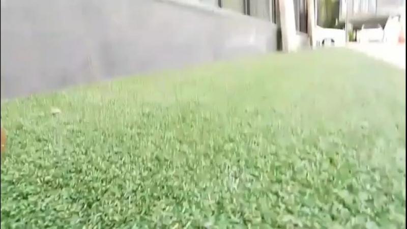 У очень хиленького Артемки было прозвище клубника Потому что в прошлом июне его дождем побило