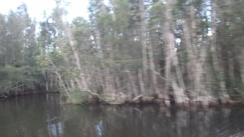 болото Сапата