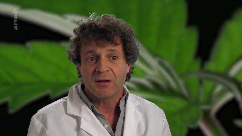 Cannabis sur ordonnance_ARTE
