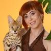 AmatyCay - питомник Бенгальских кошек и Сервалов