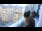Неправильный кот