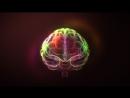 Мозг. Вторая вселенная