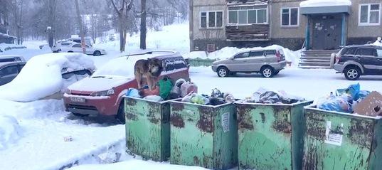 Бездомные собаки в Усть-Илимске