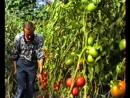 Семенаград. Семена почтой.  Семена садово-огородных и редких растений.