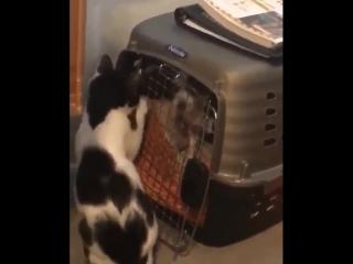 Сообразительный котик
