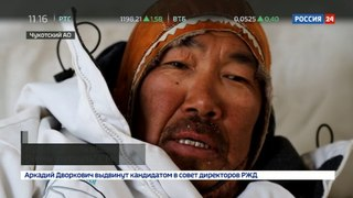 Новости на «Россия 24» • Умок стало больше: на Чукотке ученые обследовали берлоги белых медведей