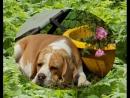 Летний лагерь для собак Чунга Чанга в Перми