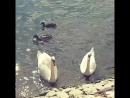 С Ленусей на берегу Рейна