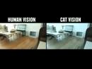 Как животные видят внешний мир в сравнении с людьми FYB
