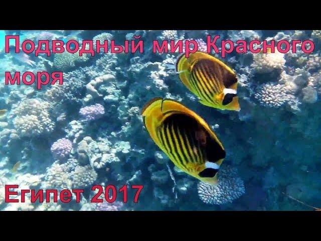 Красное море Шарм эль Шейх Египет 2017