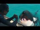 Killer whale Wikie talks to researchers