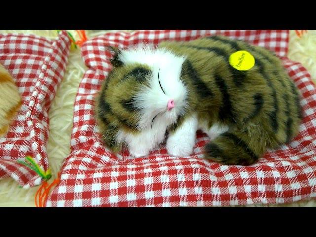 Спящие котята и спящие щенята. Лучший декор и любимая игрушка малышей.