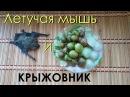 Летучая мышь и Крыжовник со Льдом | Мини Бэтмэн | Милота | Звериные титры | 4K