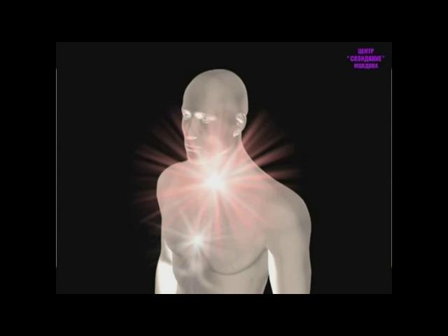 Древо жизни А Петров регенерация зубов - YouTube