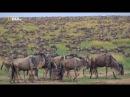 Мир дикой природы Африканская Саванна серия №2