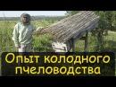 Колодное пчеловодство Реальный опыт Содержание пчел в колодах Владимир Петрушев