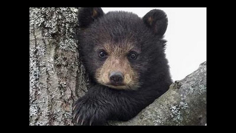 Медвежонок вышел к людям.
