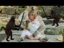 OMG Sweet Pea Monkey Vs Other Monkeys Animal Wildlife