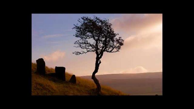 Говард Лавкрафт- Дерево на холме (Аудиокниги) Классики Ужасов