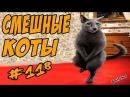 Смешные Кошки и Коты До Слёз Приколы с котами и кошками 2018 Funny Cats