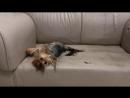 Ездить по дивану умеем практикуем