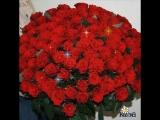 doc375754190_500086892.mp4