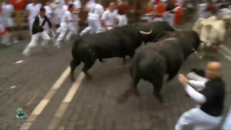 Фестиваль Бег быков в Испании- Разъяренные быки сносят все на своем пути