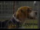Т/С Злоключения Росинанта, моей любимой собаки 8 серия 2001г