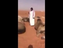 Молния убила 11 верблюдов в пустыне Саудовской Аравии 17.03.2018